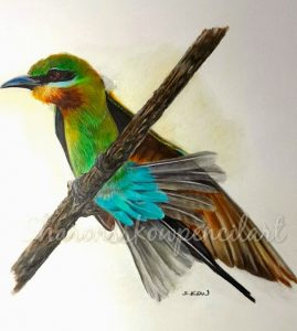 Blue tailed Bee eater2