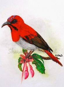 Temmincks Sunbird